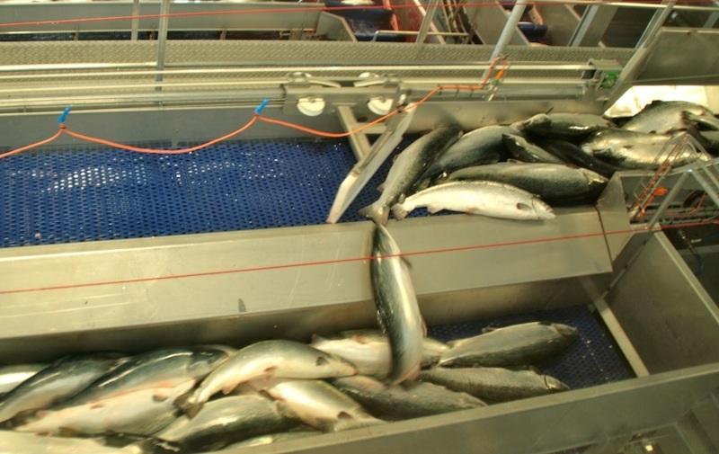 Национальный день сардин (National Sardines Day) (США) 009