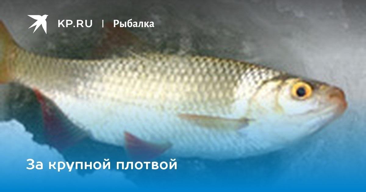 Национальный день сардин (National Sardines Day) (США) 015