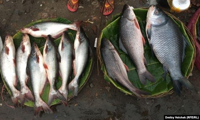 Национальный день сардин (National Sardines Day) (США) 018