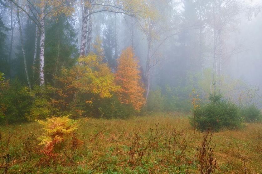 Осеннее утро в лесу картинки001