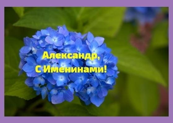 Открытки для именинника Александр 024