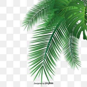 Пальма в пнг картинки 002
