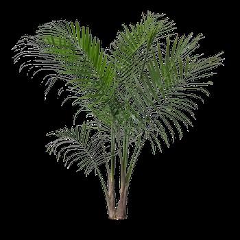 Пальма в пнг картинки 004