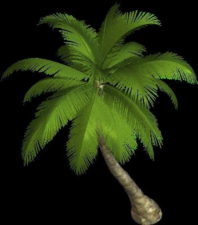 Пальма в пнг картинки 006