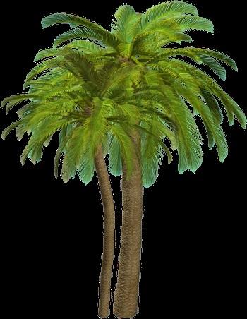 Пальма в пнг картинки 007