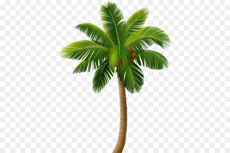 Пальма в пнг картинки 009