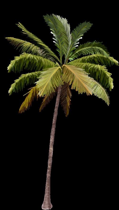 Пальма в пнг картинки 012