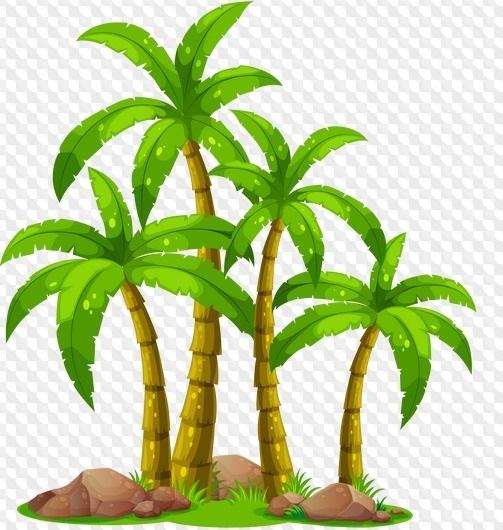 Пальма в пнг картинки 013
