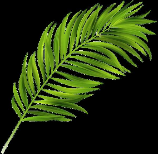 Пальма в пнг картинки 015