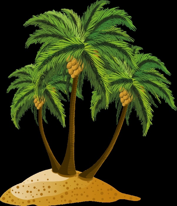 Пальма в пнг картинки 017