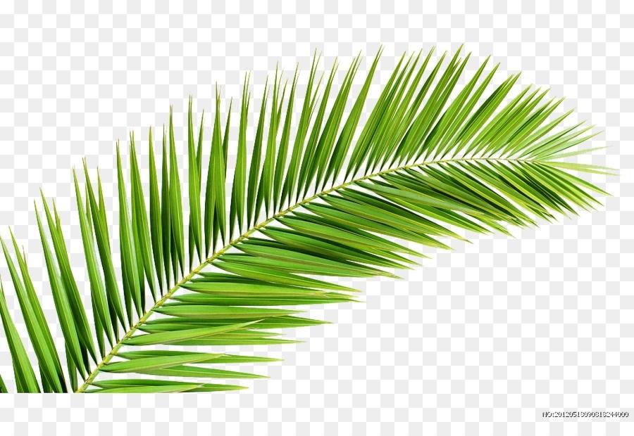 Пальма в пнг картинки 018