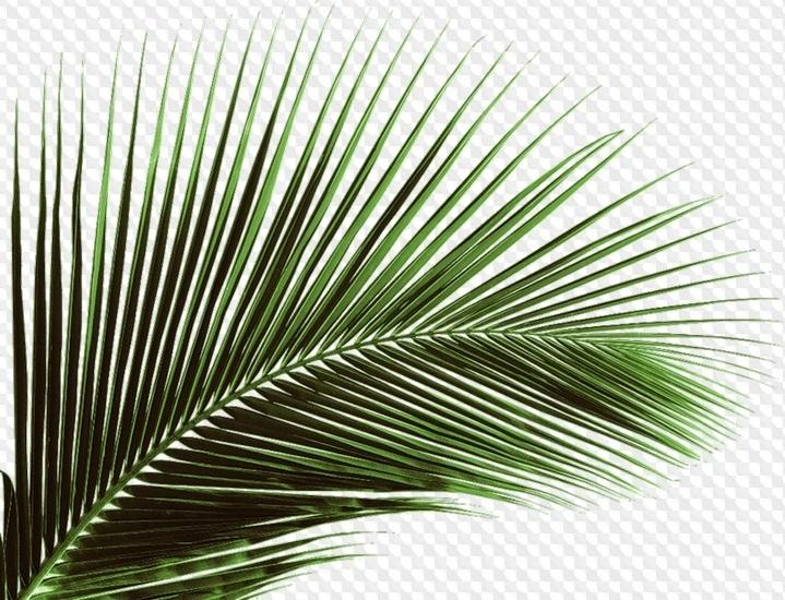 Пальма в пнг картинки 019