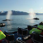 Красивые открытки | Последний день рыбацкого сезона (Исландия)