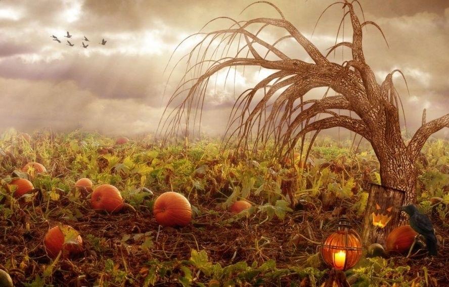 Праздник окончания уборки урожая (Самайн) в Ирландии 022