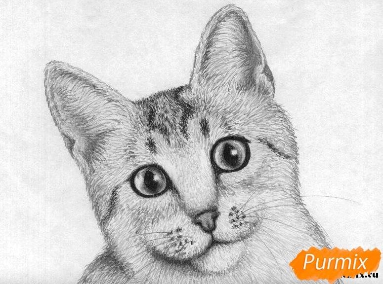 Рисунок египетской кошки 005