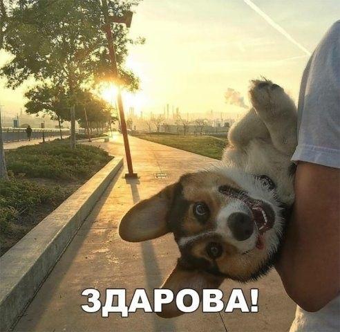 Собачки с добрым утром картинки003