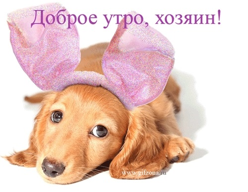 Собачки с добрым утром картинки006