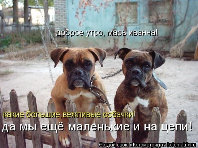 Собачки с добрым утром картинки008