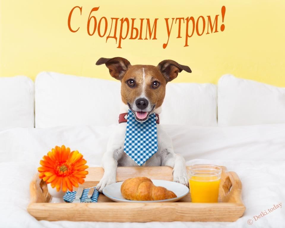 Собачки с добрым утром картинки011