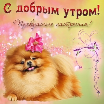 Собачки с добрым утром картинки012