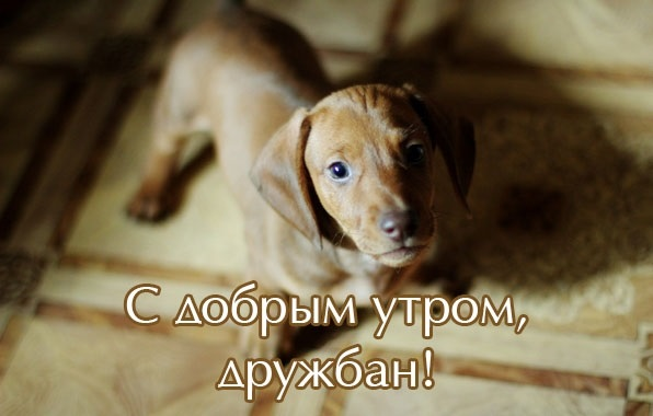 Собачки с добрым утром картинки017