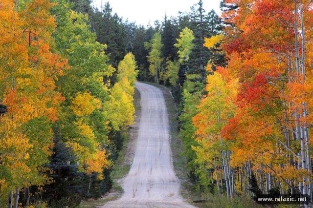 Удивительные картинки осени октябрь месяц010