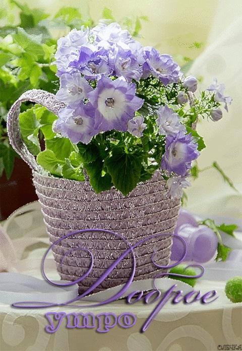 Утро нежность кофе картинки цветы007