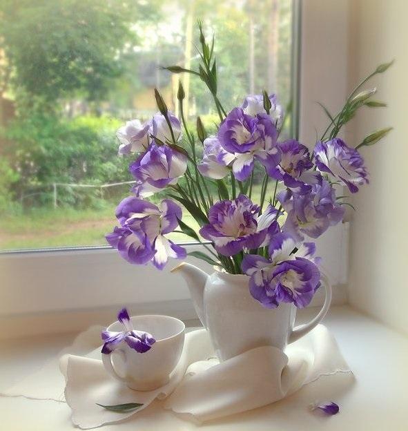 Утро нежность кофе картинки цветы008
