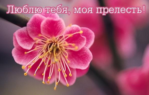 Фото доброе утро моя прелесть016