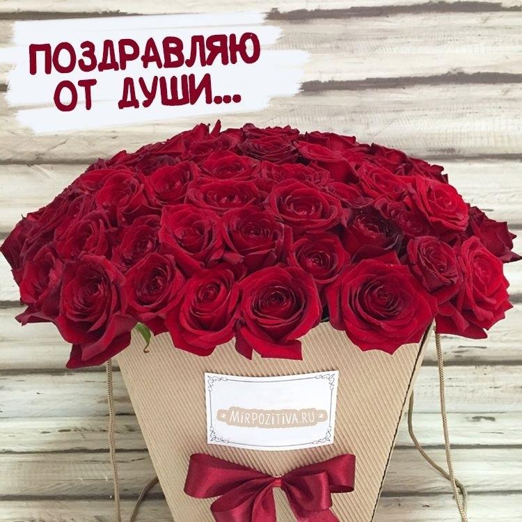 Цветы розы фото с днем рождения005