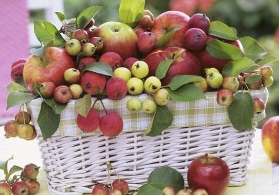 Яблочный спас 017