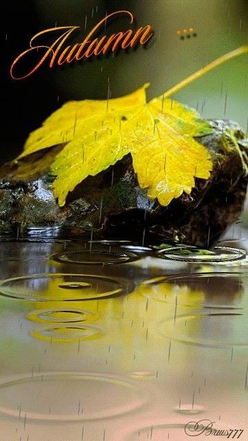блестящие картинки осень 019