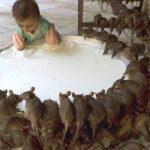 Год крысы через 2 дня — подборка