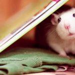 Год крысы через 3 дня — подборка