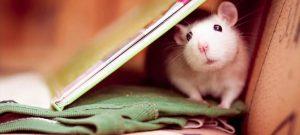 год крысы через 3 дня 020