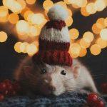 Год крысы через 4 дня — подборка