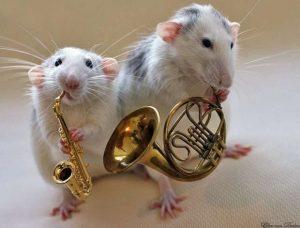 год крысы через 6 дней 024