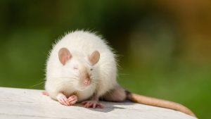 год крысы через 9 дней 022