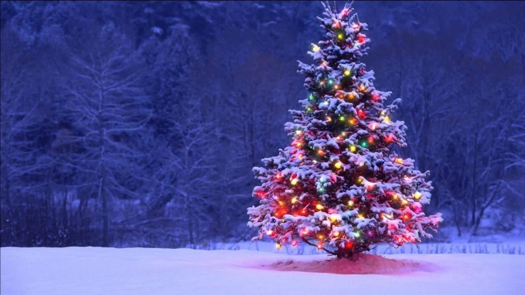 елка новый год фото и картинка 022