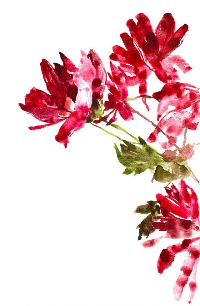 живопись цветы на белом фоне 002
