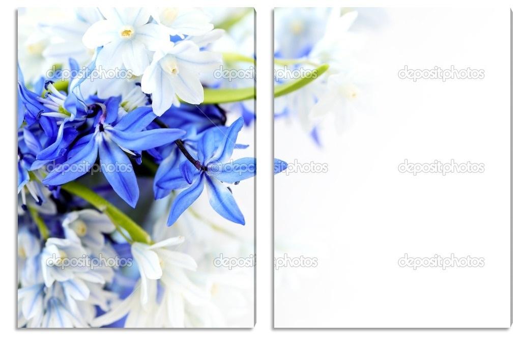 живопись цветы на белом фоне 003