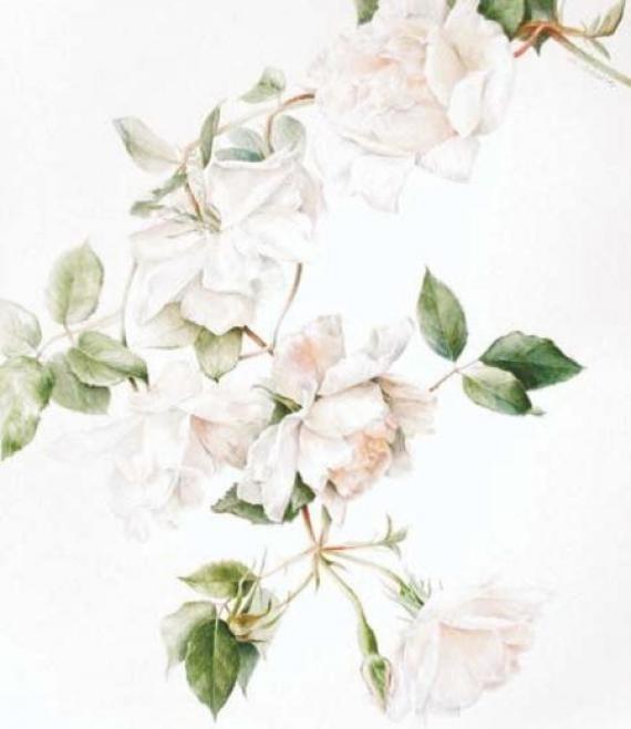 живопись цветы на белом фоне 013