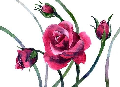 живопись цветы на белом фоне 014