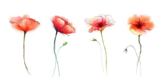 живопись цветы на белом фоне 017