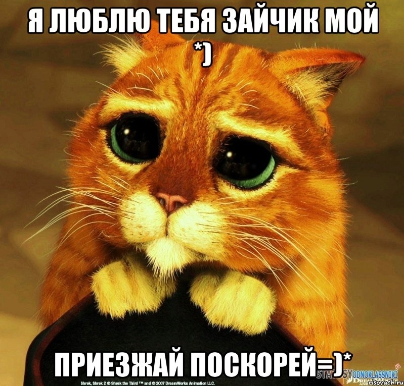 картинка мой котик любимый 021