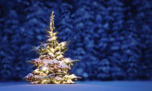картинка новый год елка 023