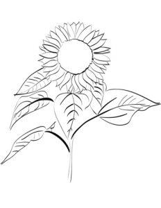 картинка соняшника для дітей 021