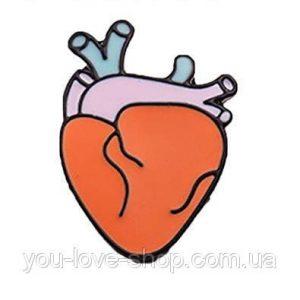 картинки анатомическое сердце 023