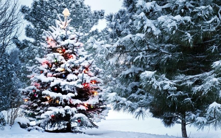 картинки зима новый год на телефон 003