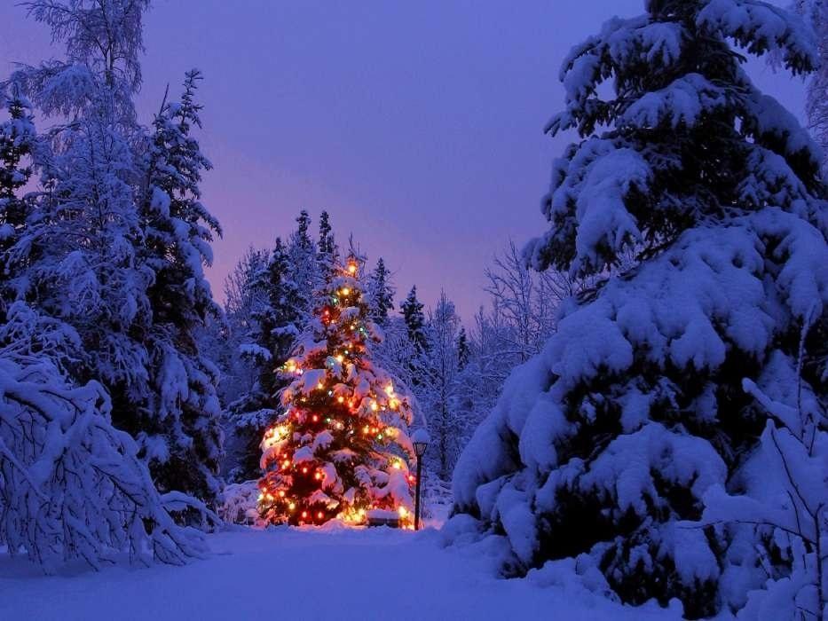 картинки зима новый год на телефон 015